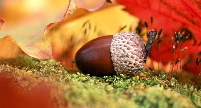 Осенний подарок от Сети Ланет - 100 по 100