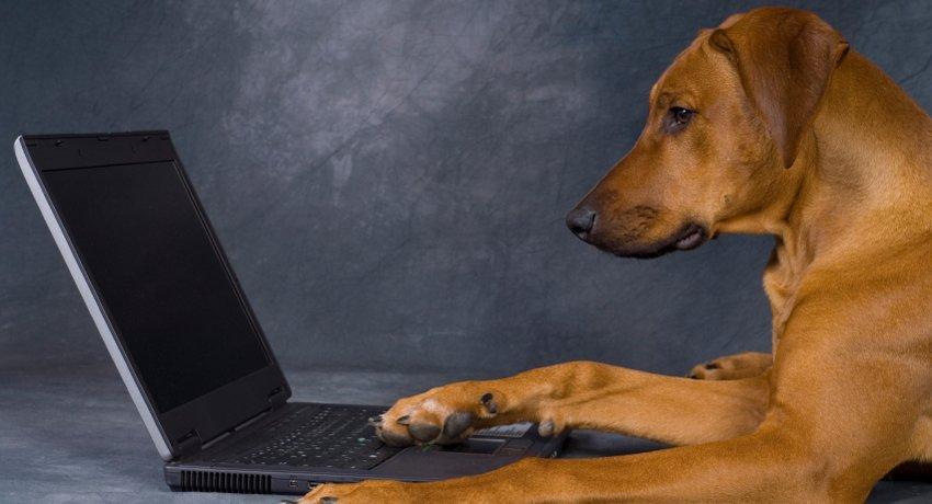 Фотоконкурс «Інтернет без меж – тваринам потрібен теж»